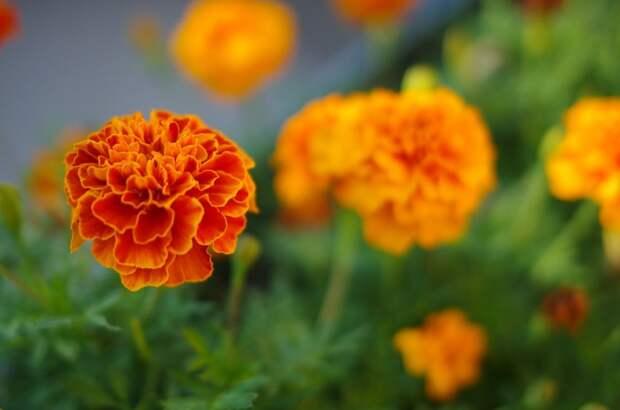 Ухаживают ли за цветами в вашем дворе? – новый опрос