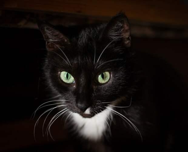 Кошку просят срочно забрать!!! Умоляем, приютите беспроблемную кошечку, которая всю жизнь была домашней.