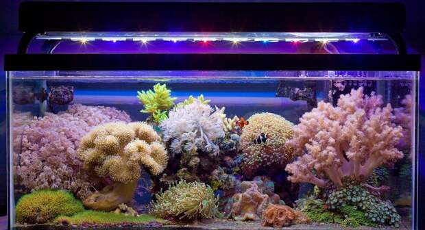 Как сделать уникальные украшения для аквариума своими руками (96 фото)