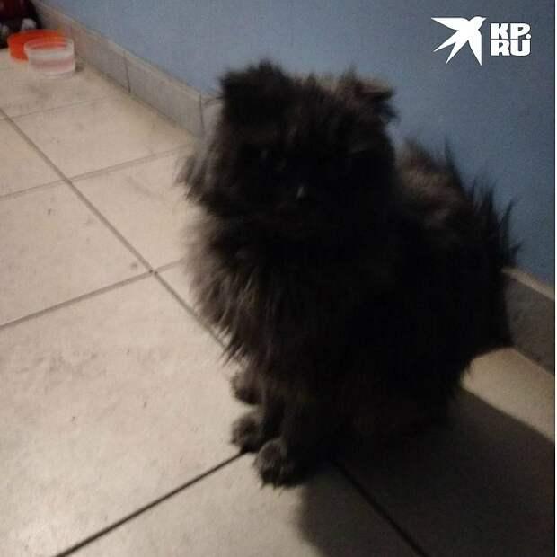 Таким кота нашли после недели жизни в автобусе Фото: Из личного архива героя публикации