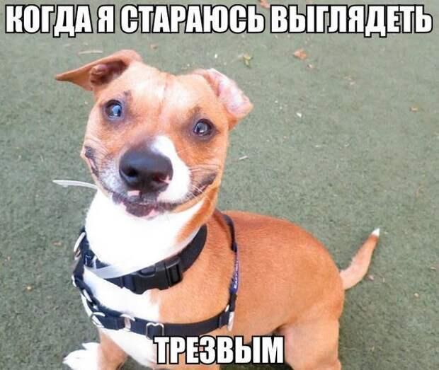 Смешные картинки с надписями для настроения (11 фото)