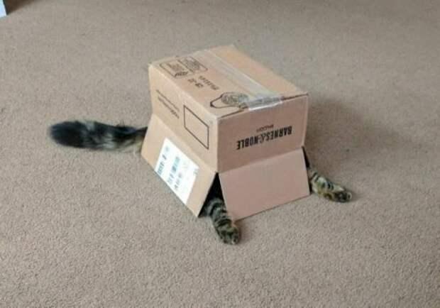 Во всех непонятных ситуациях притворяйся коробкой. интересное, кошки, фотографии