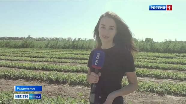 День лесника: как берегут «лёгкие» Крыма