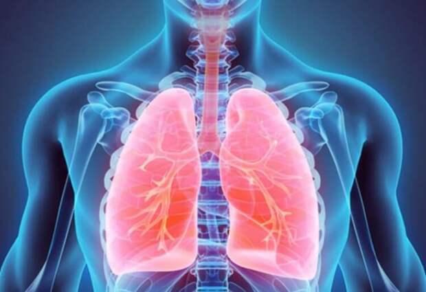 Пластмассовая жизнь: учёные выяснили, что микропластик меняет форму лёгких
