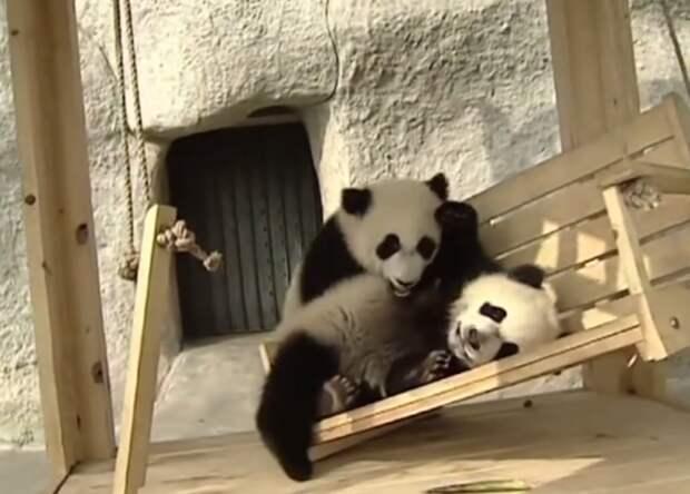 панды на горке