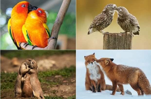 15 самых трогательных кадров проявлений любви у животных и птиц