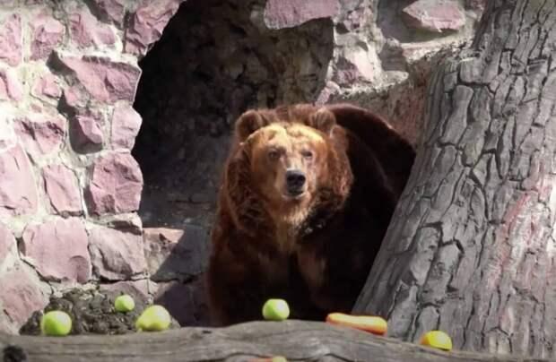 Видео: В Московском зоопарке проснулись медведи