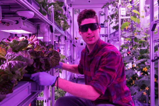 Как выращивают овощи в Антарктиде