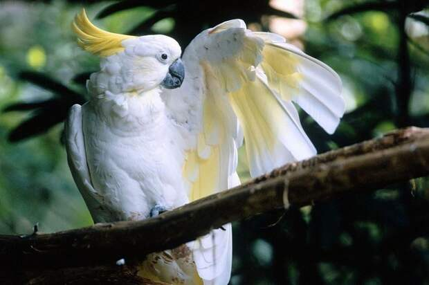 Почему попугаи могут говорить