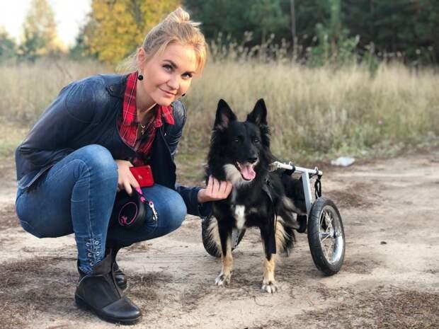 Собака ползла по улице на передних лапах. Теперь она инвалид по вине человека, но счастье ей все-таки улыбнулось