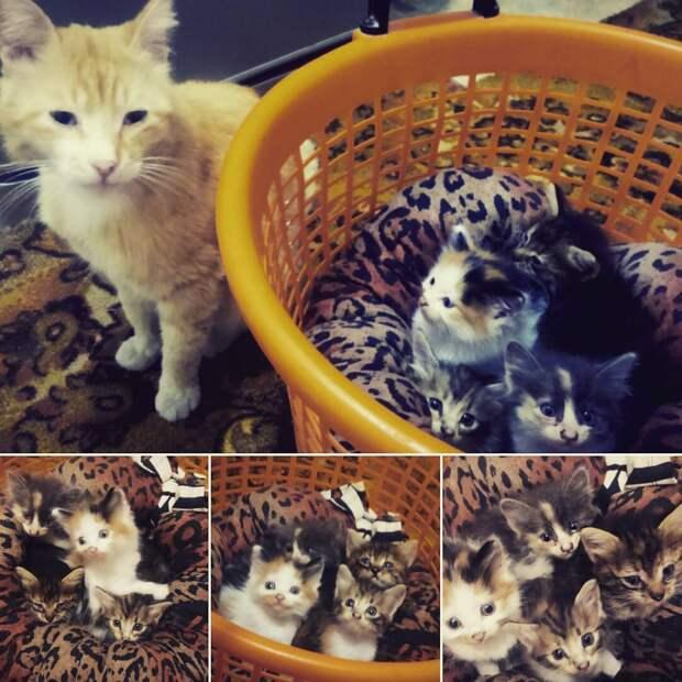 Вот такая кошачья любовь...