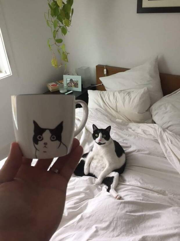 Кот на рисунке на чашке