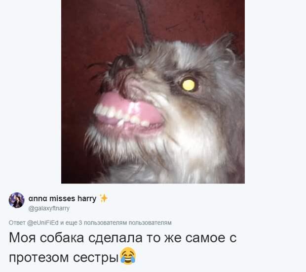 Одна пользовательница Твиттера поделилась похожей историей и даже подкрепила эпичный кадр животные, зубные протезы, зубы, прикол, собака, юмор