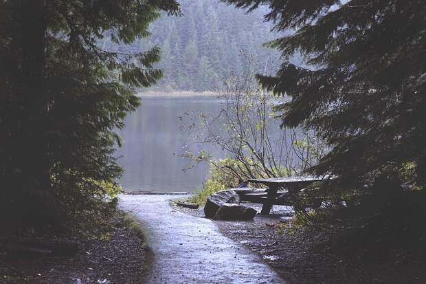 Крымчанам запретили отдыхать в лесах полуострова