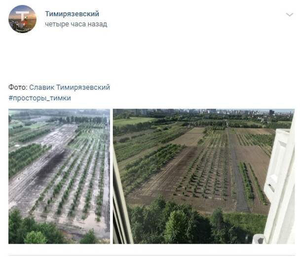Фото дня: Мичуринский сад превратился в рисовое поле