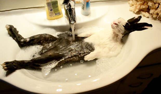 7 мимимишных фото животных, принимающих ванну