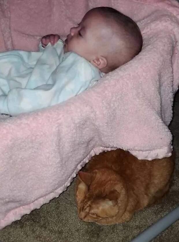 Кот притворялся, что не любит дочку хозяев, но случайно выяснилась правда