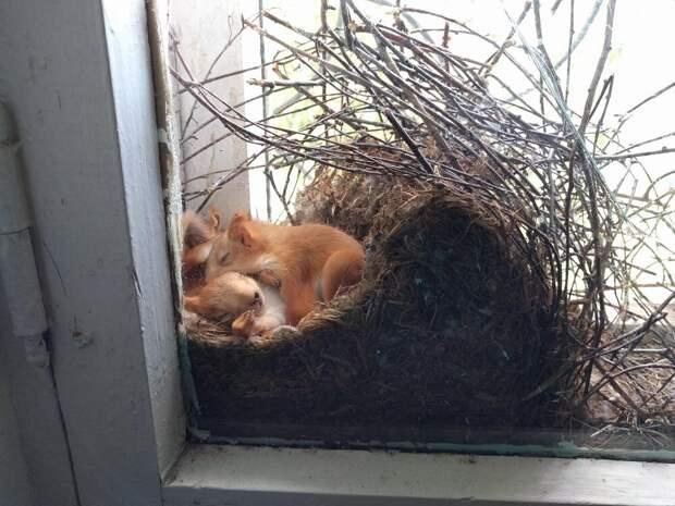 """Кто-то решил вообще не париться и устроить своё гнездо """"в самом безопасном месте на планете"""" - рядом с человеком."""
