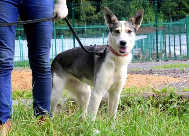 9 лет собака Афина спокойно жила себе в приюте, пока в ее жизнь И НАШУ не ворвалась Настя!
