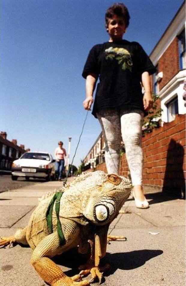 strange pet walking08