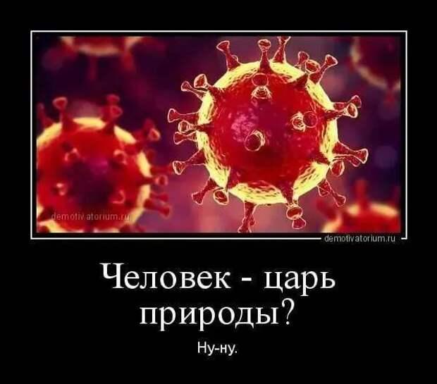 Демотиваторы про коронавирус с надписями. Подборка chert-poberi-dem-koronavirus-chert-poberi-dem-koronavirus-41230329102020-17 картинка chert-poberi-dem-koronavirus-41230329102020-17