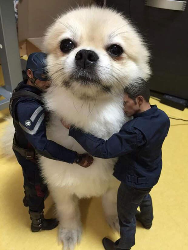 На эти 12 фото собак придется посмотреть два раза