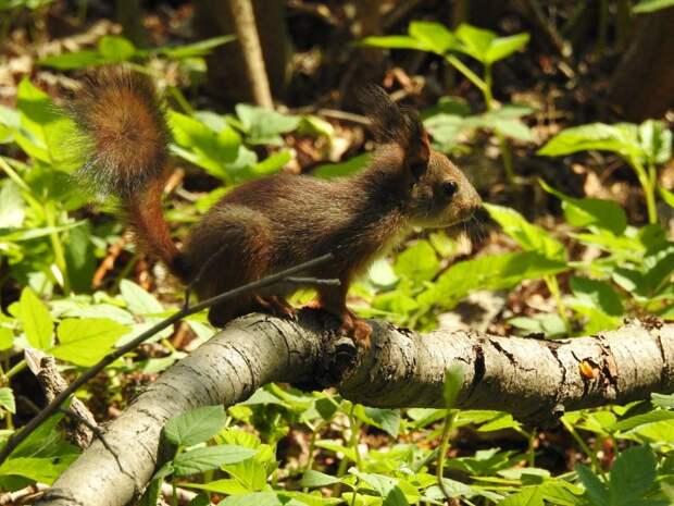 Летом белок в парках лучше не подкармливать – эколог из ЮВАО