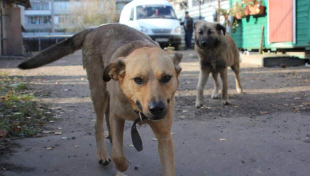 В Подольске отловили бродячих собак после нападения на женщину с ребенком