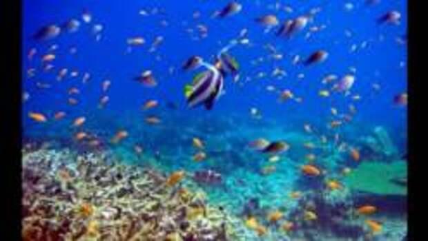ТОП-6 Животных мирового океана, с которыми можно поплавать