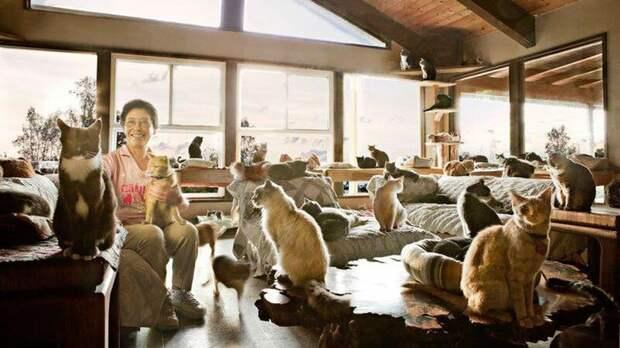 Кошкин дом: американка приютила более 1000 кошек Линеа Латтацио, америка, животные, кошки, приют, спасение