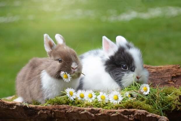 rabbit-2174679_1280-1024x684 Как ухаживать за домашним кроликом