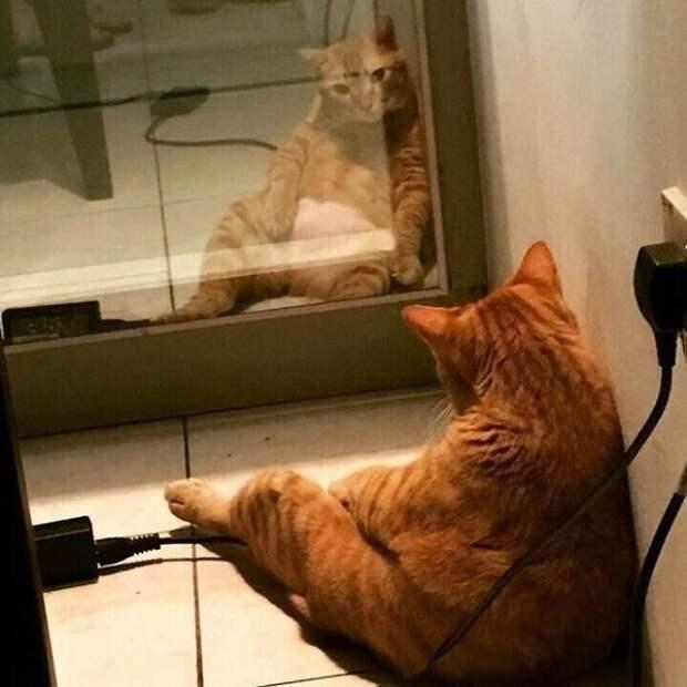 Фото №2 - Зовите психолога: породы собак и кошек с самым сложным характером