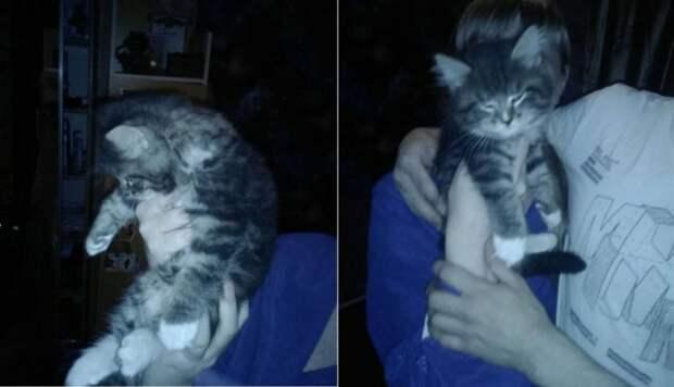 В Екатеринбурге два часа спасали котенка из вентиляционной шахты