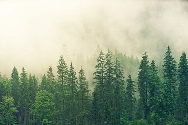 Авиапатрулирование лесов началось в Удмуртии