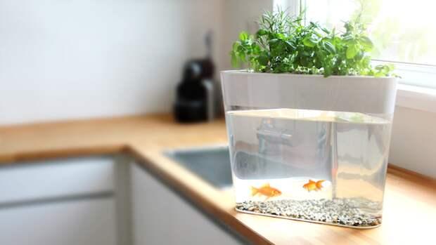 Самоочищающийся аквариум + мини-сад