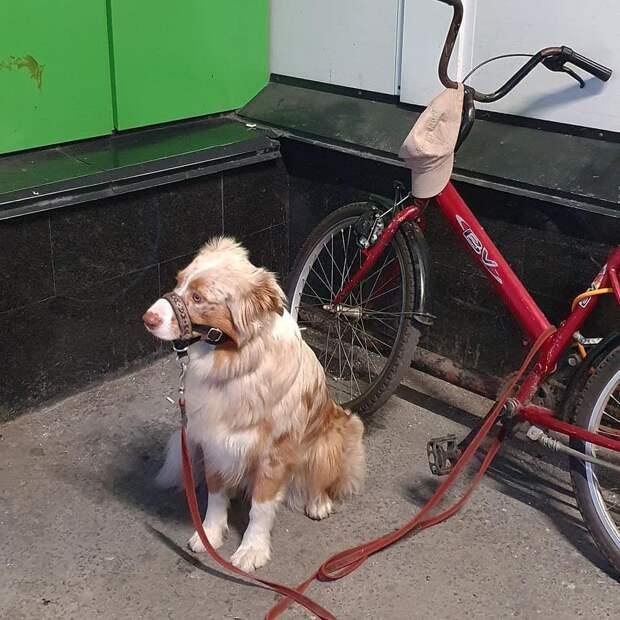 Посмотрите, как грустно выглядят собаки, когда ждут хозяев из магазина