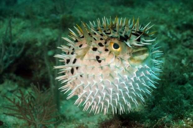 10 смертельно опасных существ, которые используются в терапевтических целях
