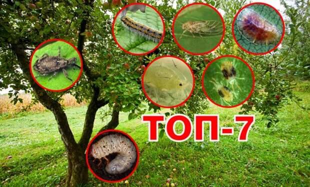 Топ-7 самых опасных вредителей сада