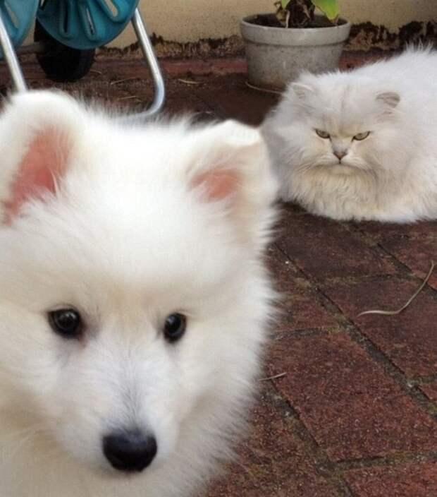 10+ смешных фотографий котов, которыми можно лечить плохое настроение