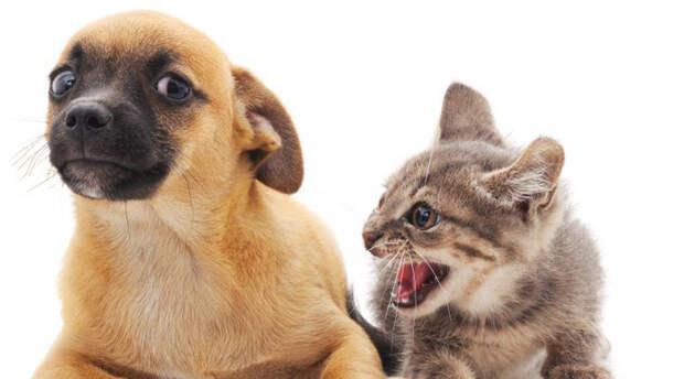 Животные, которых нельзя заводить вместе