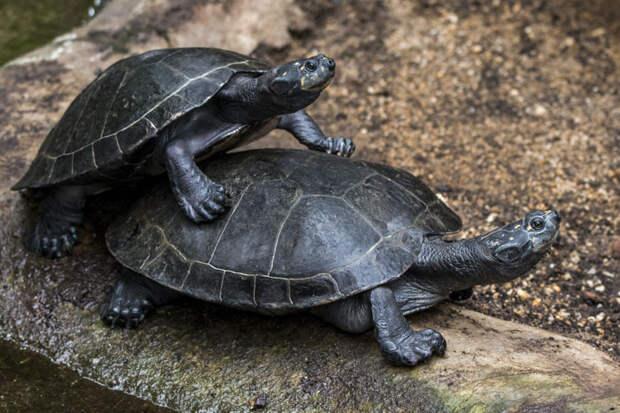 Малоизвестные факты о животных от работника одного из крупнейших в мире зоопарков