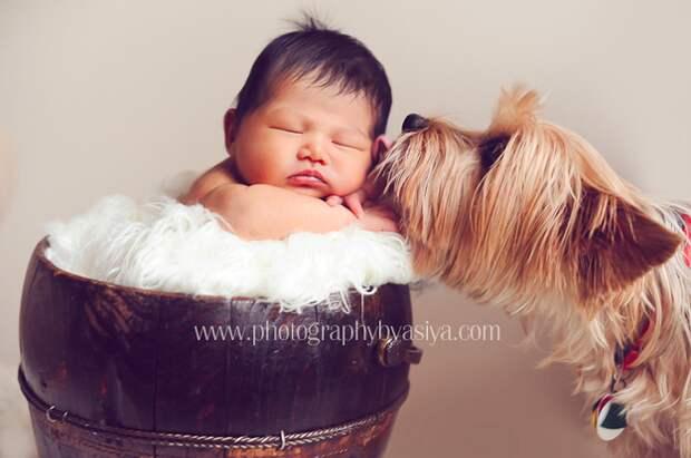 младенцы и собаки первая фотосессия (18)