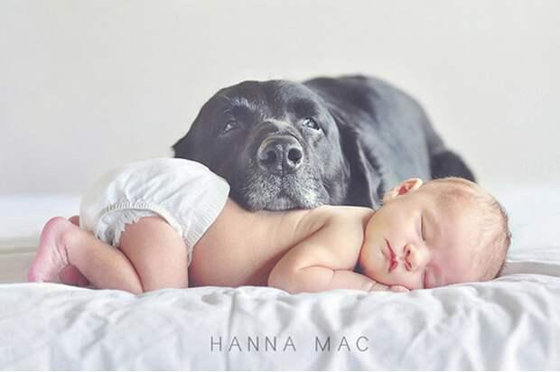 младенцы и собаки первая фотосессия (7)