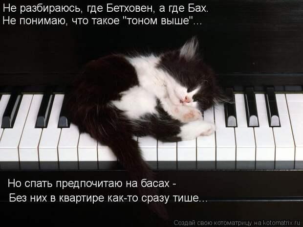 """Котоматрица: Не разбираюсь, где Бетховен, а где Бах.  Не понимаю, что такое """"тоном выше""""... Но спать предпочитаю на басах -  Без них в квартире как-то сразу ти"""