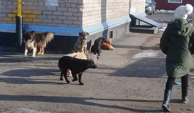 На работников мэрии Оренбурга завели уголовное дело из-за нападений бродячих собак