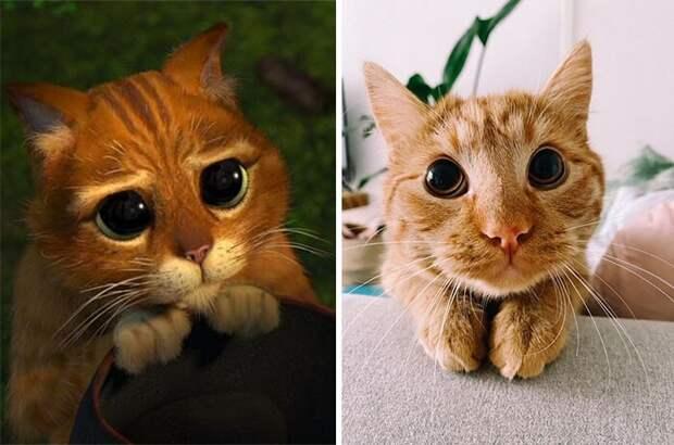 Милый котик из«Шрека» существует насамом деле!