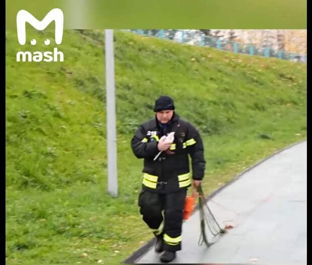 Пожарный рассказал подробности спасения чайки в Дюссельдорфском парке