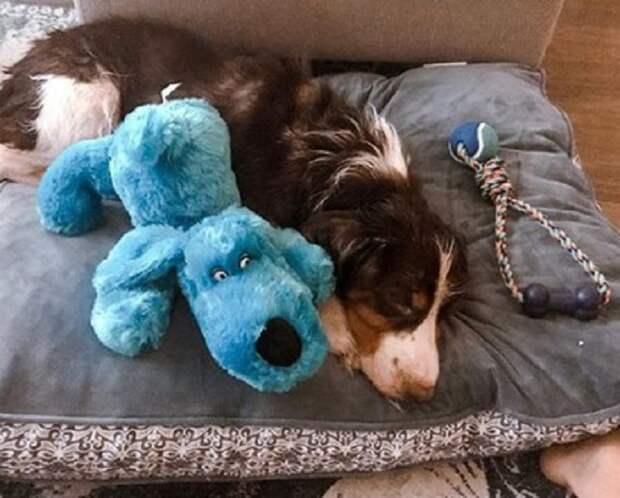 Пес и иргушка