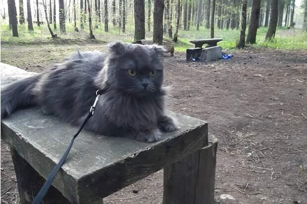 Сбежавший кот застрял в Эстонии и из-за коронавируса не может вернуться в хозяйке в Петербург