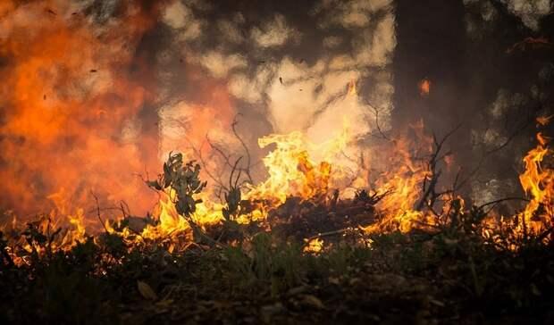 ВТюменской области полицейские задержали поджигателя сухой травы